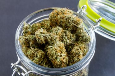 Medical Marijuana Buds