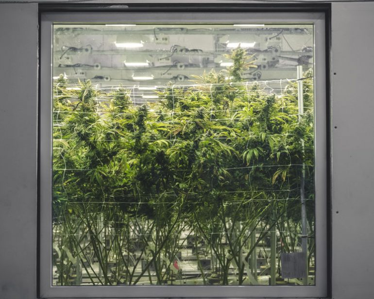 Commercial Cannabis