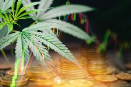marijuana leaves cannabis stock exchange market