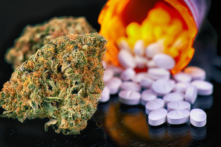 Cannabis buds and prescriptions pills