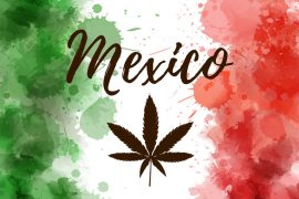 Mexico flag with marijuana leaf