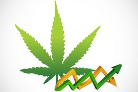 marijuana rocking profits