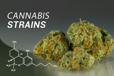 7 cannabis strains with body-focused effects